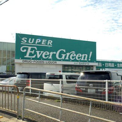スーパーエバーグリーン